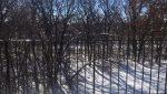 minnetonka condominium rental woods